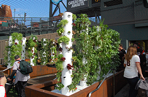 The Garden at Oracle Park