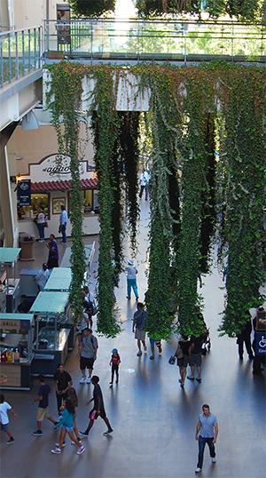 Hanging vines in Petco Park concourse