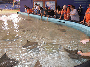 Rays Touch Tank at Tropicana Field